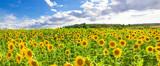 Fototapety Feld mit Sonnenblumen - Nähe schwäbische Alb