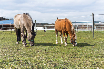 Horses grazing in a paddock at a stud