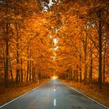 Fototapety road in autumn woods