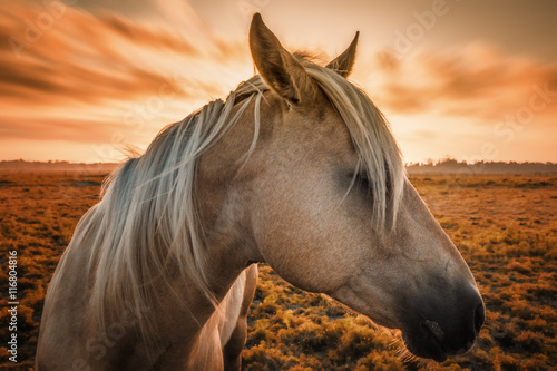 Horse Profile with Sunset Poster