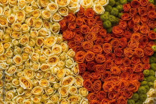 Zdjęcia na płótnie, fototapety, obrazy : Colorful rose background