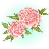 old rose pink peony flower illustration vector
