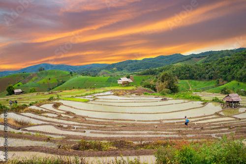Fotobehang Hmong woman with rice field terrace background in Chiangmai , Th
