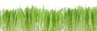 Grüne Gräser, Dekor