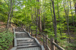 Stairway in a lush and verdant forest at the Namsan Hill (or Namsan Park or Namsan Mountain) in Seoul, South Korea.
