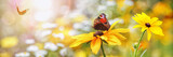 Fototapety Summer, Flowers, Butterflies (Aglais io)