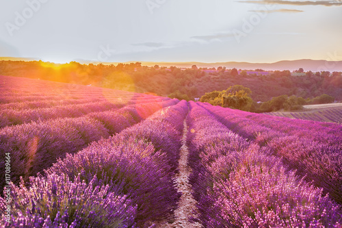 Foto op Canvas Lavendel Lavender field against colorful sunset in Provence, France