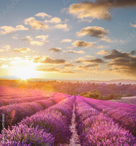 Canvas Lavendel Lavender field against colorful sunset in Provence, France