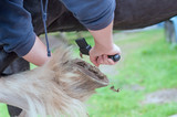 Horse hoof being cleaned  - 117094217
