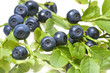blueberries in the detail