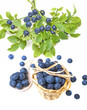 still life with fresh blueberries on white background