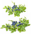 blueberries in the detail isolated on white