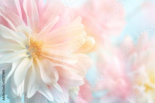 rozowy-piwonia-kwiat-tlo