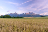 Morning view of High Tatras, Slovakia. Horizontal shot of mountains landscape with grain fields in a front. Beautiful morning light.
