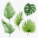 Watercolor tropical palm leaves. Vector illustration.  - 117140284