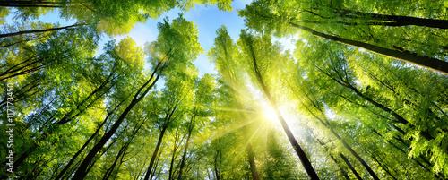 Zauberhafter Sonnenschein auf grünen Baumkronen im Wald - 117173450