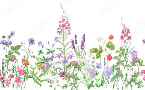 Panoramic view of wild meadow flowers and grass on white background, horizontal pattern, watercolor painting, realistic illustration © analgin12