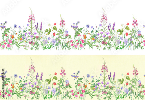 Panoramic view of wild meadow flowers and grass on white and vintage background, horizontal pattern, watercolor painting, realistic illustration © analgin12
