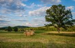 Beautiful summer afternoon county setting with freshly rolled bales of hay near large tree