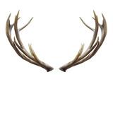 deer horns. - 117244430