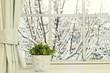 Bellis flowers in a pot on a window in a snowy day - 117256016