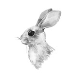 Cute rabbit. Watercolor illustration. Black and white bunny