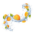 Apricots in water splash on white background