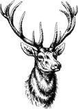 Fototapety Vintage inage deer head