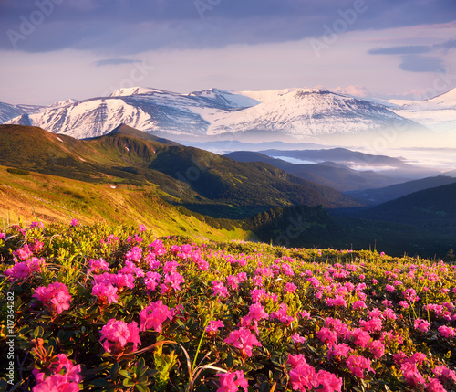 Summer landscape with flowering mountain slopes