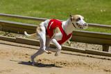 Gekke houding tijdens het sprinten.