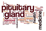 Pituitary gland word cloud concept