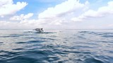 Tranquil and serene slow motion video of wild dolphins jump from water in sea - 117408290