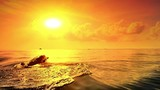 Dolphins swim in sea at sunset with bright evening sun and yellow sky on horizon - 117408452