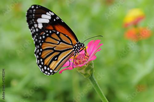 Deurstickers Vlinder Butterfly with Flower in garden.