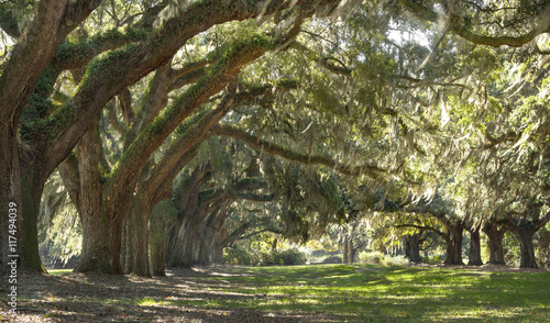 Live Oak trees forest - Located outside of Charleston SC of St. John Island sits this amazing landscape.