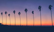 Vintage California Beach Photo - Row of palm trees silhouettes during a colorful sunset at the beach in California