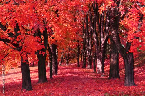 Fotobehang Rood traf. color autumn forest