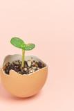 ヒマワリ 芽 エコロジー