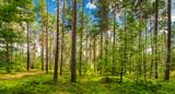 Wald Natur Landschaft