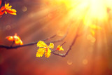 Autumn background with colorful leaves and sun flares