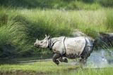Greater One-horned Rhinoceros in Bardia national park, Nepal - 117602033