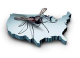 Zika Virus In The United States