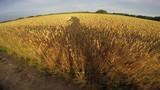 Driving bike by wheat field on bad road, 4K