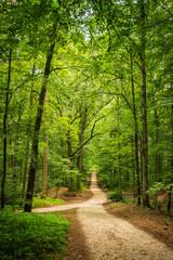 Wald Weg Bäume Laubwerk Grün