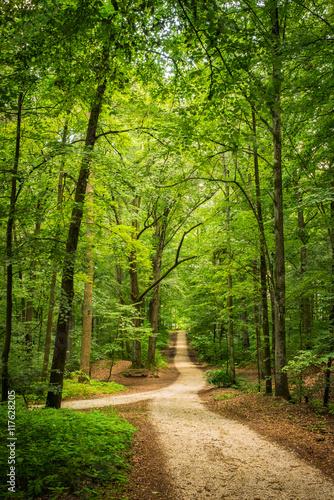 Foto op Plexiglas Weg in bos Wald Weg Bäume Laubwerk Grün
