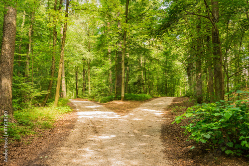 Fototapeta Wald Weg Richtung Entscheiden