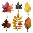 set of watercolor autumn leaves