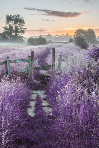 Beautiful vibrant Summer sunrise over English countryside landsc