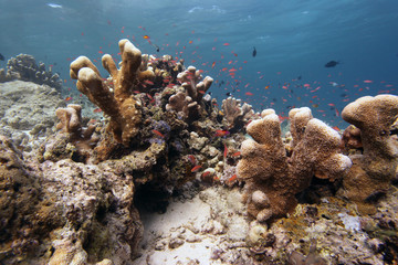 podwodny świat - rafa koralowa
