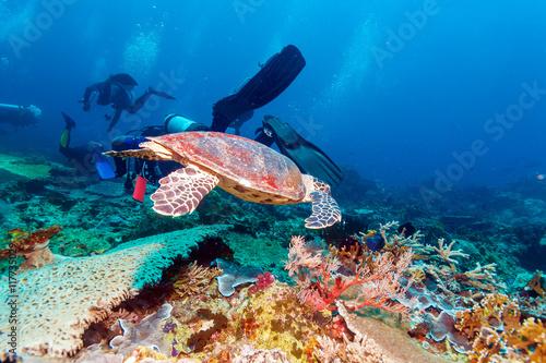 Fotobehang Koraalriffen Green Sea Turtle near Coral Reef, Bali